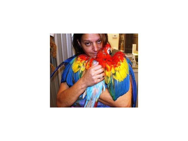 Scarlet macaw proven breeder Pairs for sale