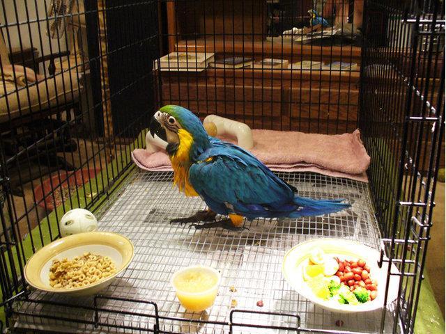 Capitve Breeds Macaw Baby Species on sale