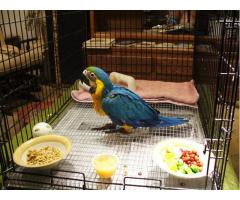 Capitve Breeds Macaw Baby Species on sale