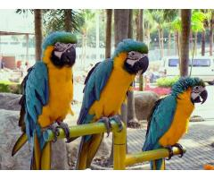 Healthy,trained and tamed parrots and Fertile Parrots Eggs for Sale