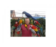 parrot chicks, breeding pairs,incubators and fertile eggs for sale