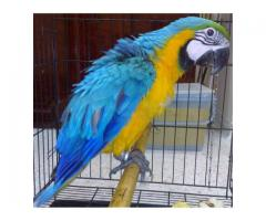 BABY AFRICAN GREY,COCKATOO,MACAWS,OSTRICH AND OTHERS FOR SALE